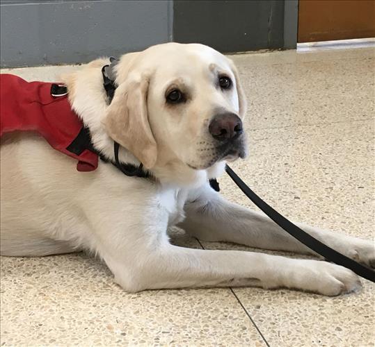 Garmin, our service dog